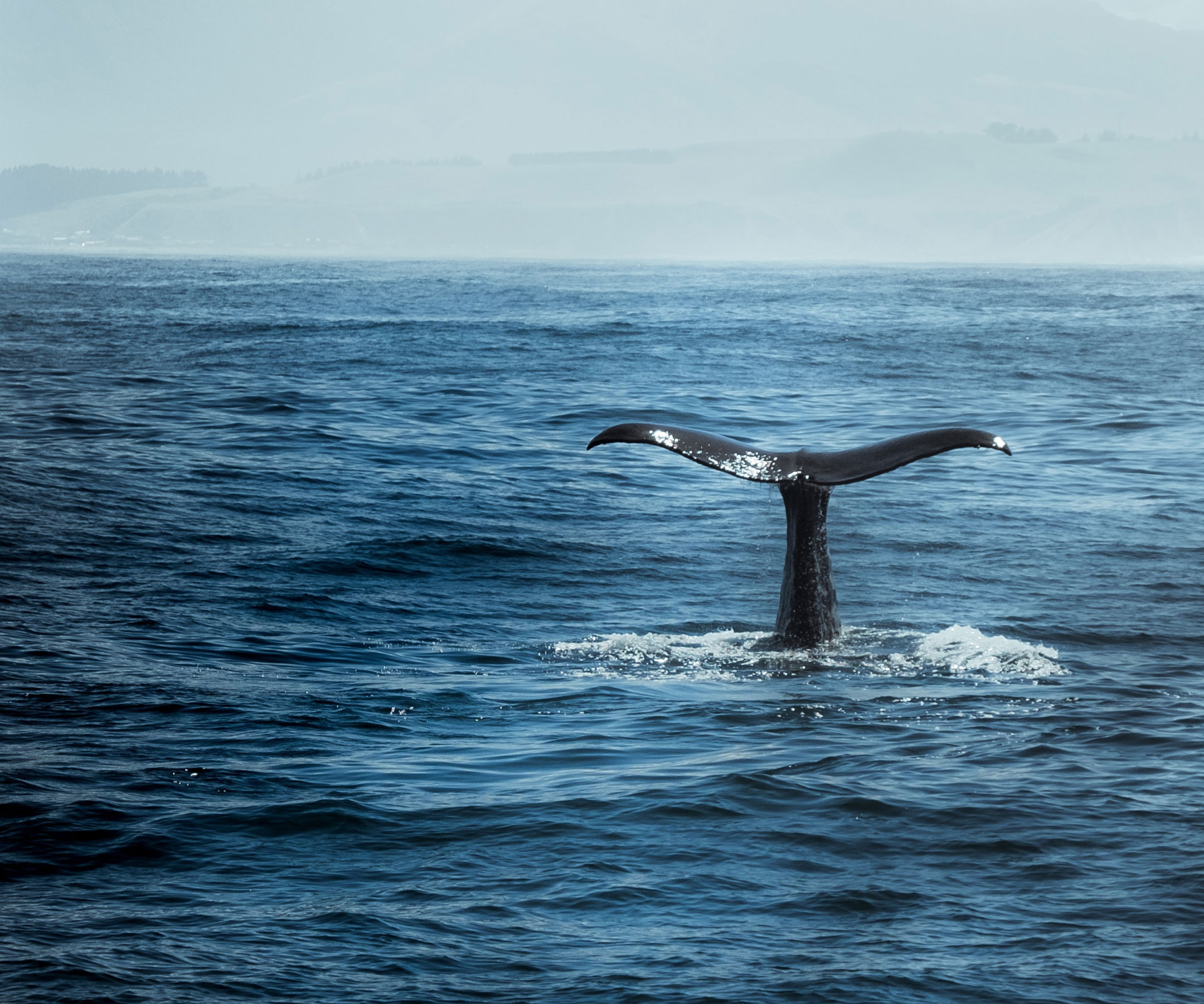 Whale City Tail